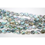 Abalone Shell 16x18mm Oval